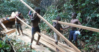 VPA-FLEGT: legal logging and trade of artisanal timber, a business for all in Province Orientale
