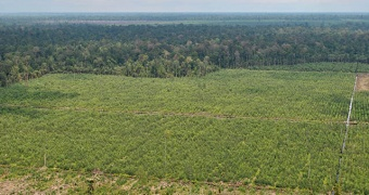A new paper rejects claims that drainage of peatlands for plantations can be sustainable