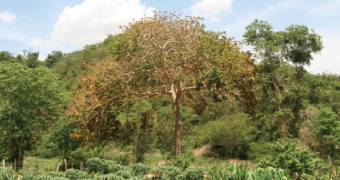 Strenghtening of the use and conservation of the tropical dry forest in the educational processes in the Colombian Carribean region