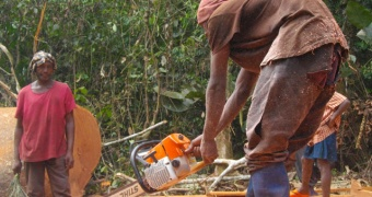 The voice of artisanal loggers in the Orientale Province of DR Congo is heard
