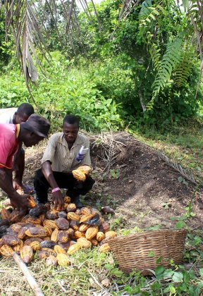 Oil palm in the wider landscape and threats to Nigeria's forests