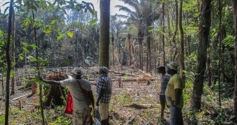 Forest users to producers: Scaling up FFPOs business and enterprises