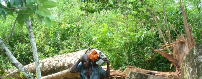 Promoting legal timber trade for sustainable forest management in Ghana