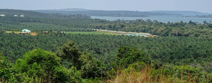 Oil palm plantations in forest landscapes: impacts, aspirations and ways forward in Uganda