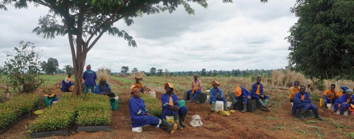 Catalyzing partnerships for reforestation of degraded land