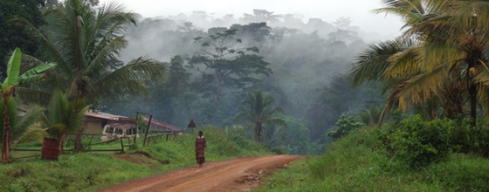 Forest finance partnerships more productive than competition