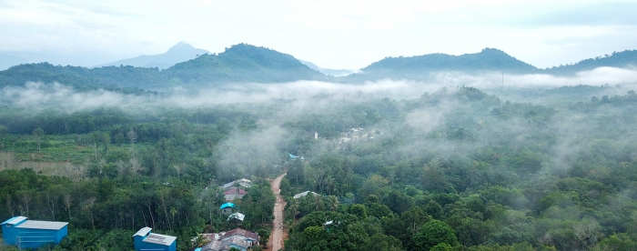 The village forest of Laman Satong: for money and more
