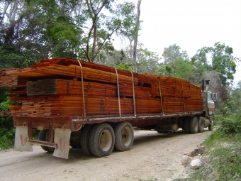 SUB: Sawn wood, stamped with the FSC logo, is transported by truck. Photo by A. Rodas