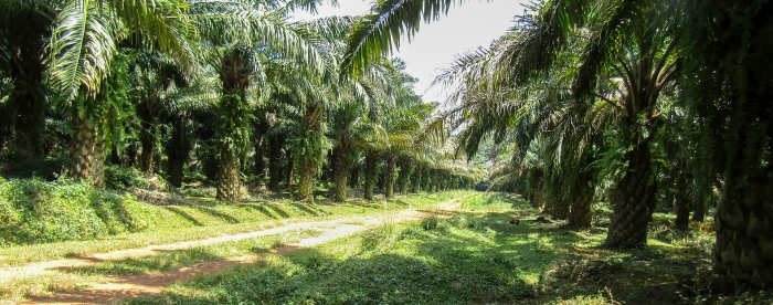 Lessons learned and recommendations for future developments of oil palm in Kalangala and Buvuma, Uganda
