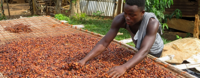 Cocoa sector takes deforestation seriously