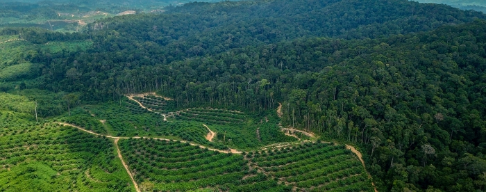 European Parliament wants binding measures against deforestation