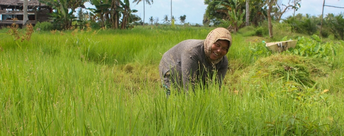 Social Forestry Business Unit: strengthening people's economy in Indonesia